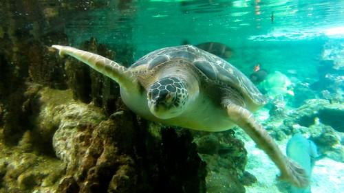 Acquario di genova prezzi orari e l 39 acquario segreto for Prezzi acquario tartarughe