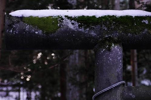 鳥居と苔と雪と