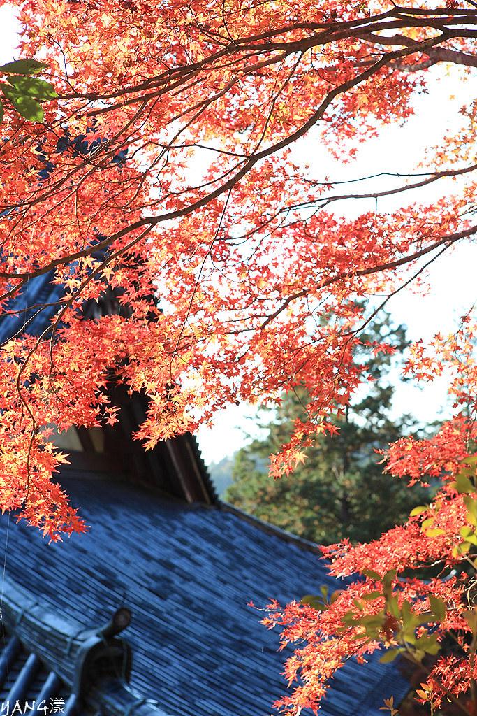京都高雄神護寺