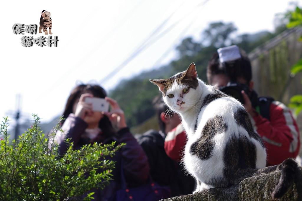 侯硐&貓咪村