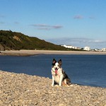 Dog Beach Knap Barry