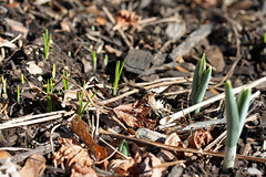 winter sprouts 018