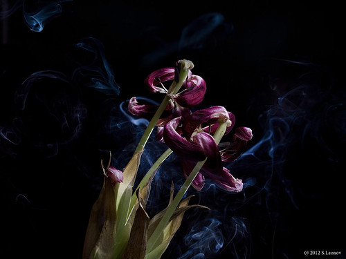 dead_flower_1 by S.Leonov