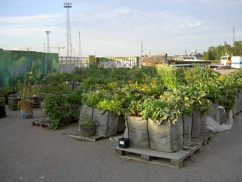 Kalasatama garden