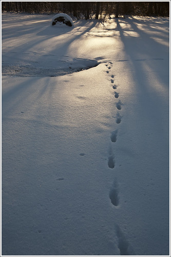 20120131. Tracks and shadows. 2262. by Tiina Gill