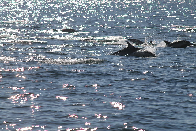 Dolphin Pod Flickr Photo Sharing