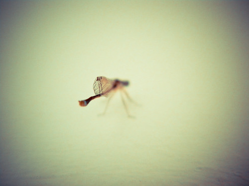 Libelula - Dragonfly by PAWLUK IVAN