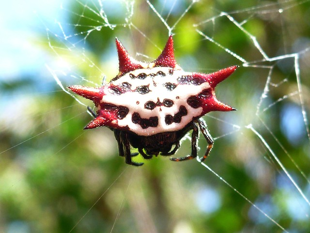 florida spiders ii flickr photo sharing