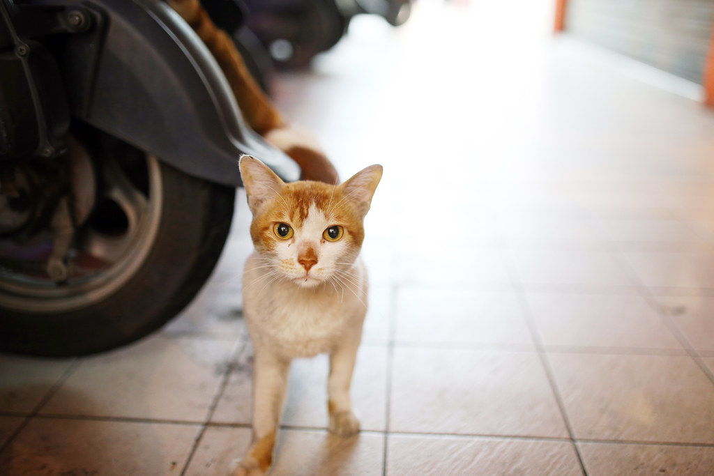 IMG_1877 很黏的貓 很黏的貓 Photo by Toomore
