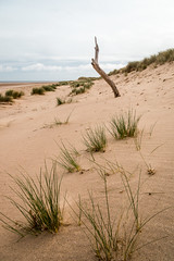 Holkham Beach and dunes Norfolk