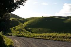 Deepest, greenest New Zealand
