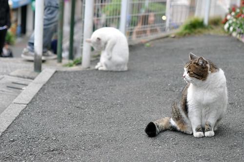 DANDAN-cats
