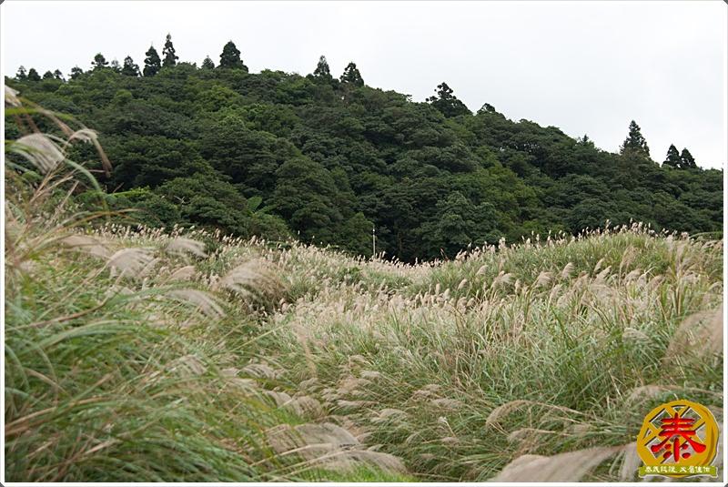 2011.11.26 - 陽明山秋芒-26