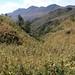 Cornfield - Maizal en el camino entre Yosonduchi y San Andrés Chichahuaxtla (Región Mixteca), Oaxaca, Mexico por Lon&Queta