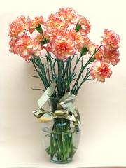 carnation, flower arranging, cut flowers, flower, artificial flower, floral design, plant, vase, flower bouquet, floristry, pink,