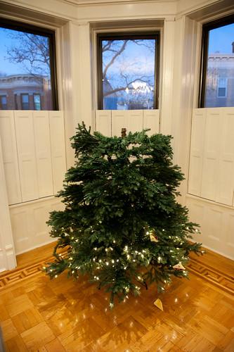 ChristmasTreeBalsamHill-8