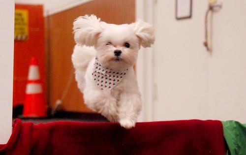 Festive Jumping