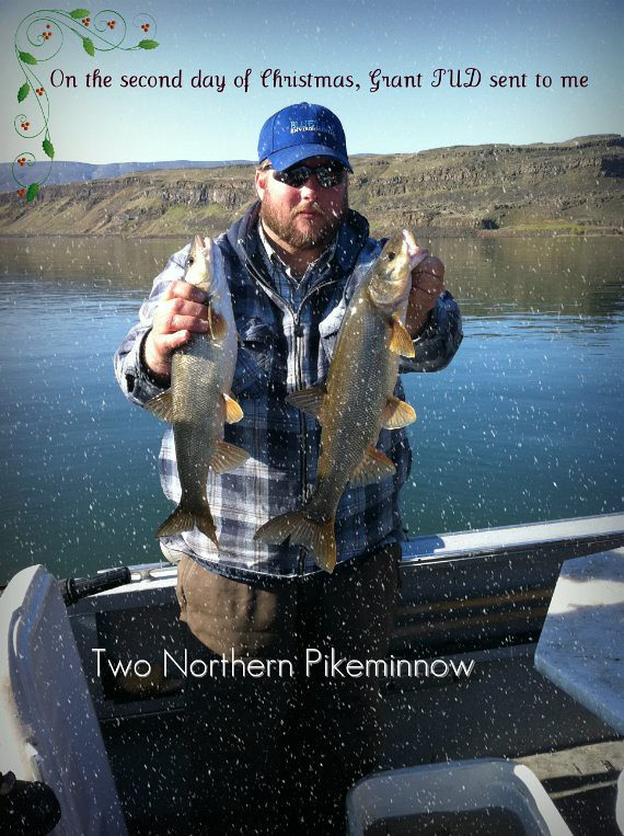 Two Northern Pikeminnows