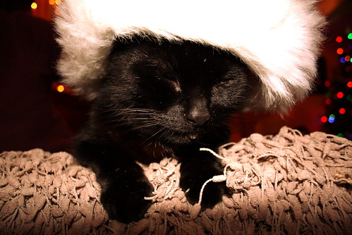 Kitty Cat Christmas.