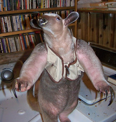 Ori tamandua in fishing vest