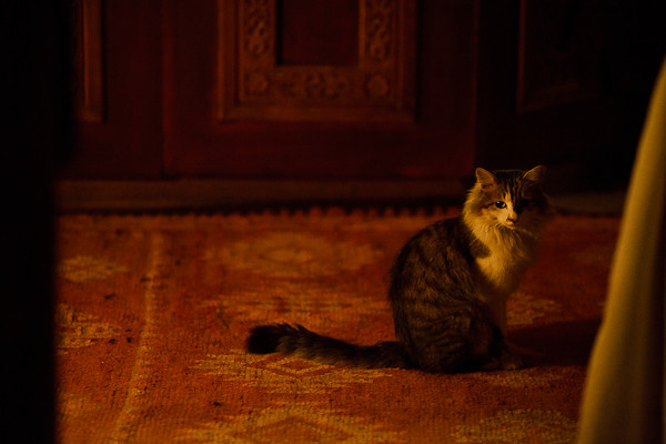 Maroc 2011 - Chat dans mon riad - Marrakech