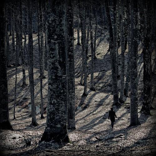 trees tuscany bosco camaldoli ef70200f40l eos5dmarkii orione1959