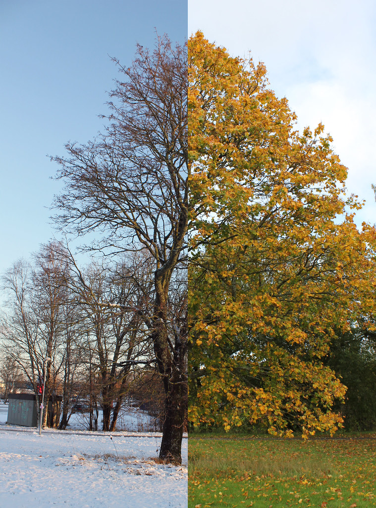 Winter Vs. Autumn