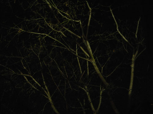 Trees at Night _ 9262