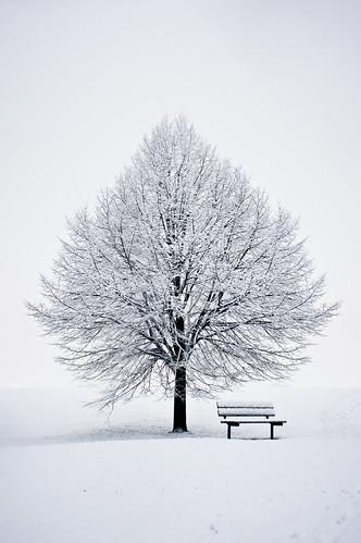 無料写真素材, 自然風景, 樹木, 雪, 白色・ホワイト, 椅子・ベンチ・ソファ