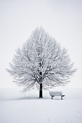 [Free Images] Nature, Trees, Snow, White Color, Chair / Bench / Sofa ID:201112312000