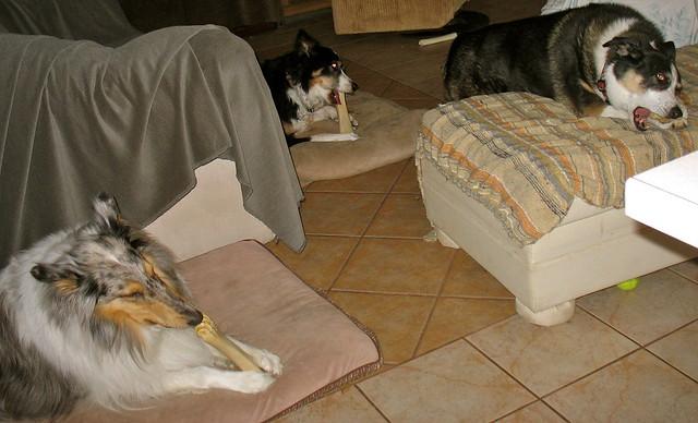 Sparky Dog House