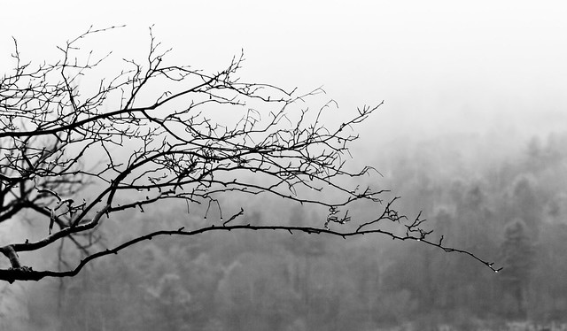 Winter Branch (B&W)
