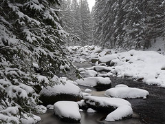 Zimní Povydří aneb Rezavá kráska Vydra ve sněhobílém rouchu