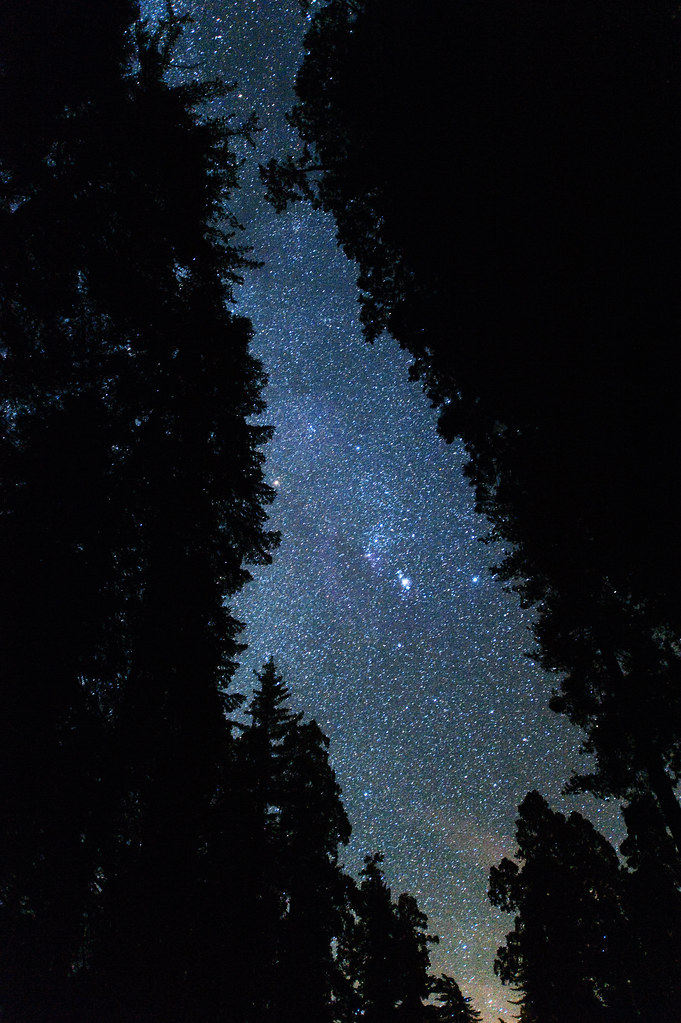 Orion through the Grant Grove