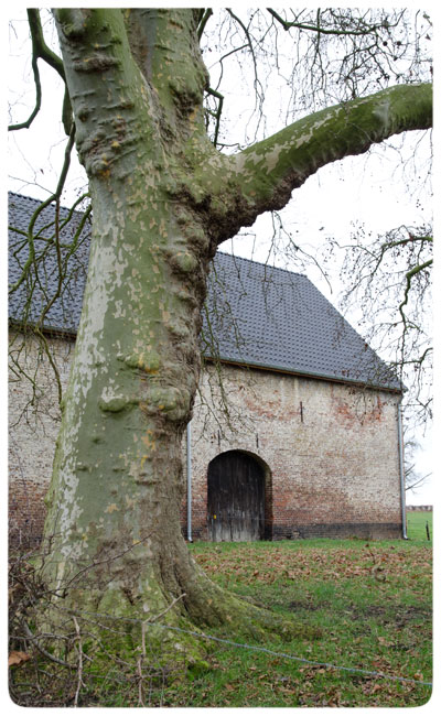 Old-barn-&-gnarled-tree