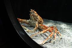arthropod, crab, animal, seafood, invertebrate, macro photography, fauna, close-up,