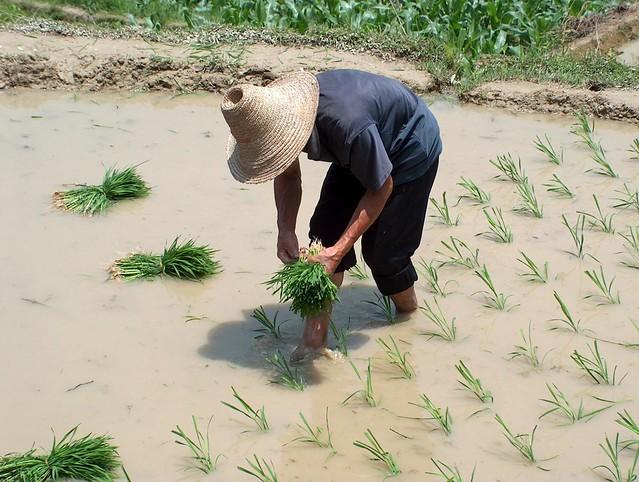 農業競爭力該怎麼救?農產品進攻電子商務絕對有一線生機