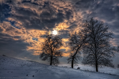 winter snow tree clouds sunrise landscape virginia landscapes nikon pastoral 2012 pec awardtree tomlussier landscapespec2012