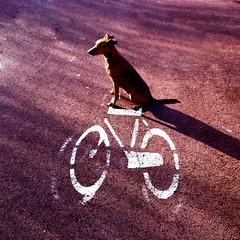 371 hop on your bike !
