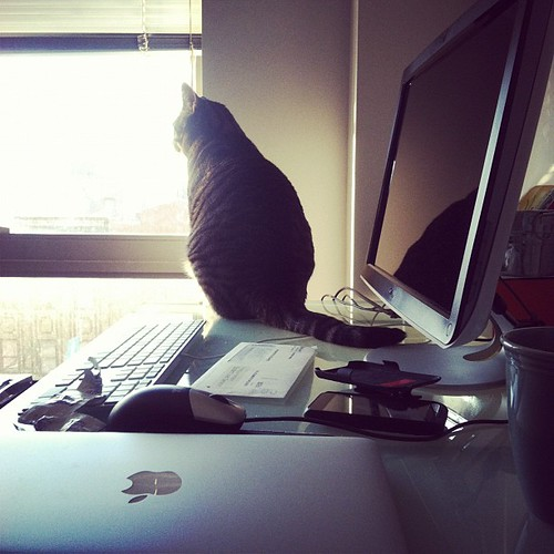 Busy Sundays of a working cat. Office never sleeps.