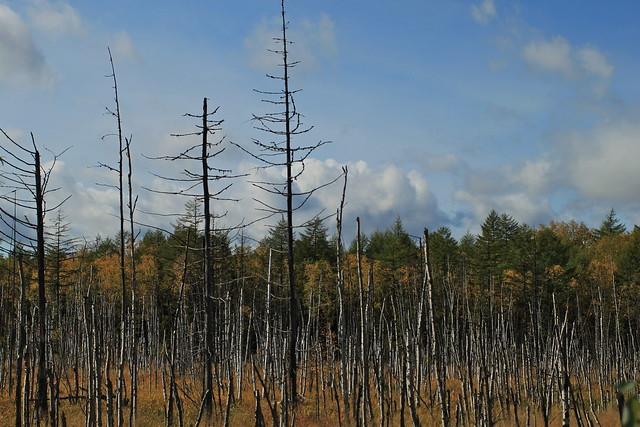 Swampy trees