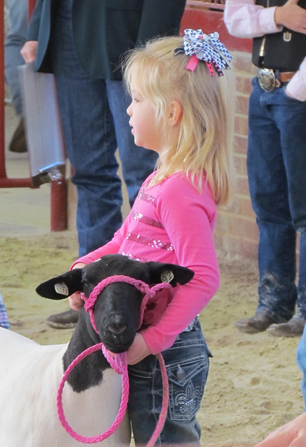 girl stockshow