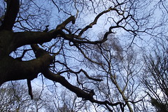 How To Get Great looking photos, Oak Tree in Chains