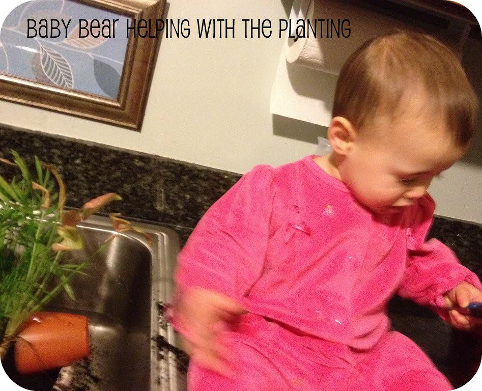 baby bear planting