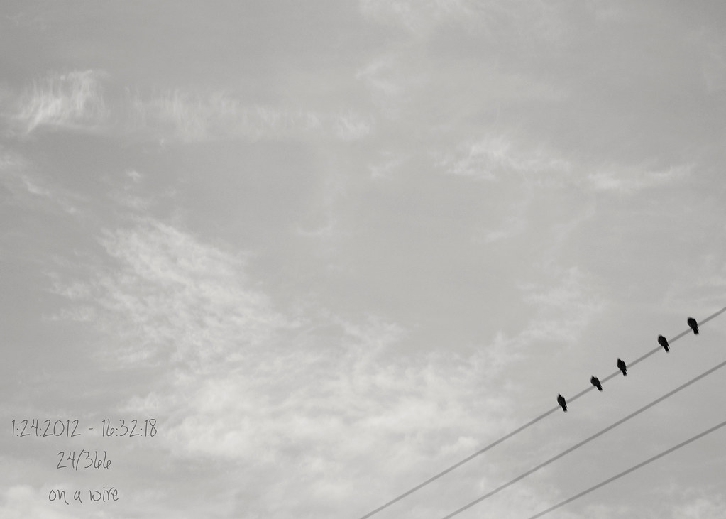 24/366 : on a wire