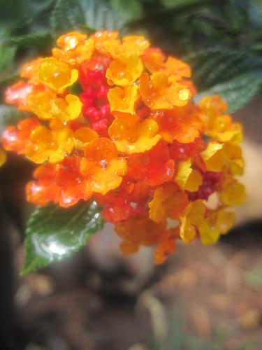 """Butterfly Bush"" by eagle_eyes_87"