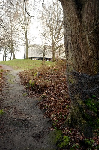 That winter feeling, bound tree, lumpy path, leaves, Gas Works Park, Seattle, Washington, USA by Wonderlane