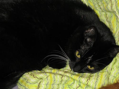 quilt cat!