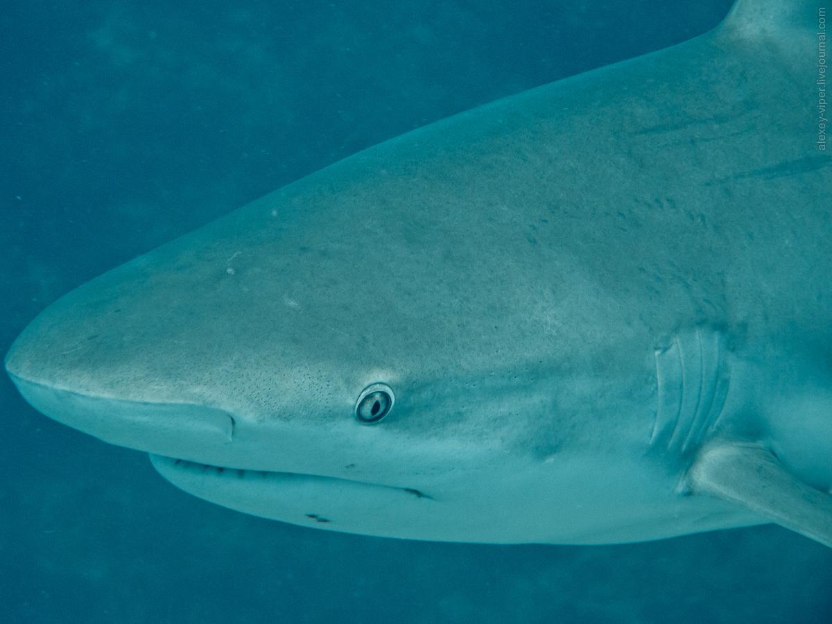 2012.01.12-2012.01.26_dive_safari_[cuba]-diving-016