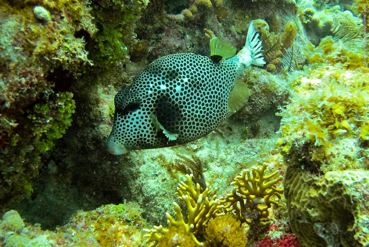 2012.01.12-2012.01.26_dive_safari_[cuba]-diving-024
